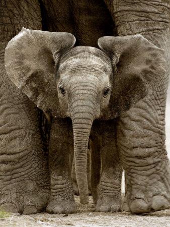 baby-elephant-cute