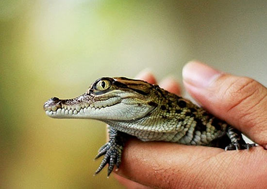 Image result for baby croc
