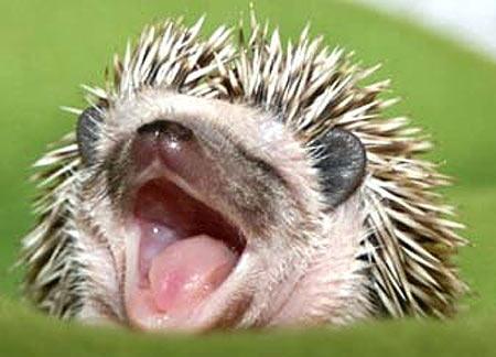 Yawning or Yelling?