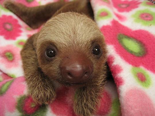 Okay, A Sloth and Some Random Thoughts.