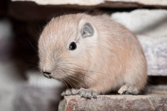 baby-gundis-cute-pics