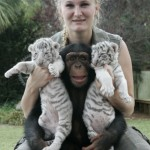 chimp-raises-tiger-cubs-cute