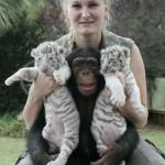 chimp-raises-tiger-cubs-cute