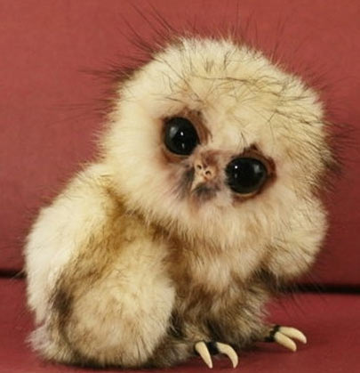 Spectacled Owl Chicks Born Fluffy White | Baby Animal Zoo