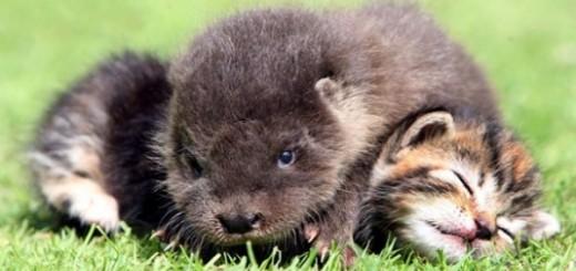 baby-otter-baby-kittens