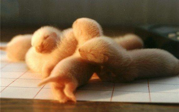 Cute Arctic Animal Babies