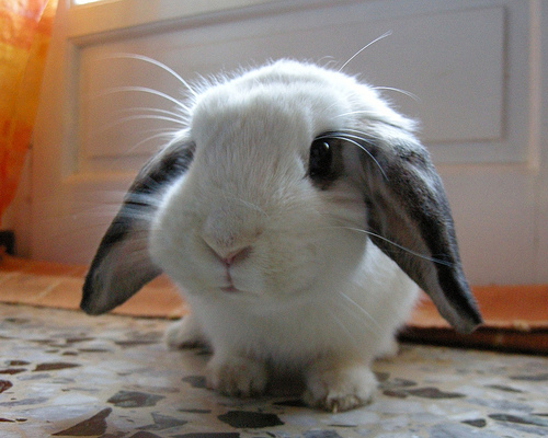 Bunny Rabbits: One of Nature's Cutest and Cuddliest | Baby ...