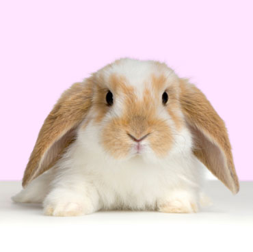 Cute Baby Images on Rabbits  One Of Nature   S Cutest And Cuddliest   Baby Animal Zoo