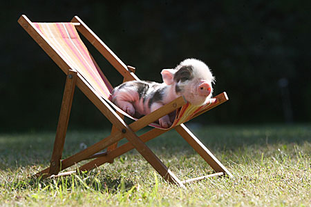 Piglets Are As Cute As You Thought They Were, But Far More ... Baby Tigers Sleeping