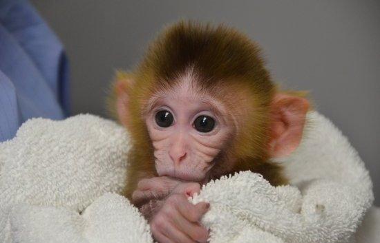 Baby Monkey 2