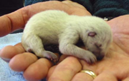 external image cute-wolverine-baby-pics.jpg