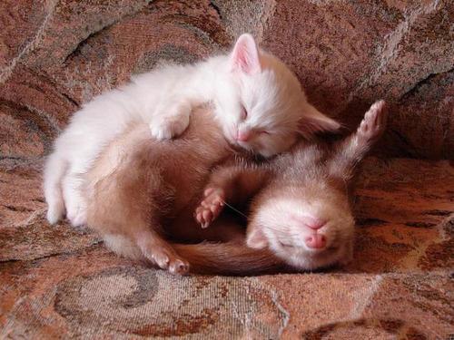 """Képtalálat a következőre: """"baby animal sleep cute"""""""