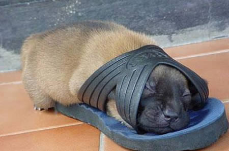 Baby Animals Need Sleep Baby Animal Zoo