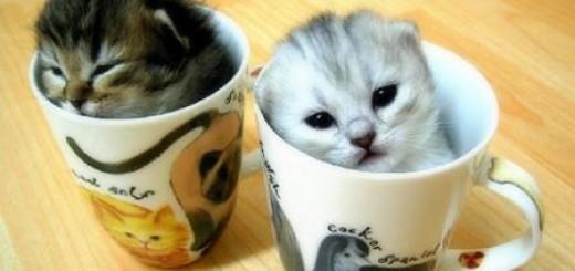 kitten-rescues