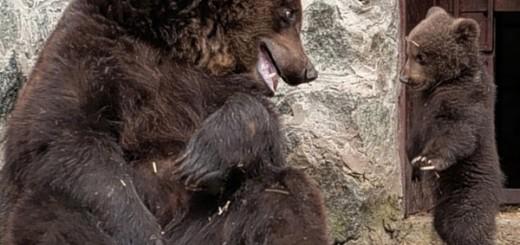 bear-cub-discipline-cute-pics