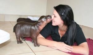 hippo-baby-kiss