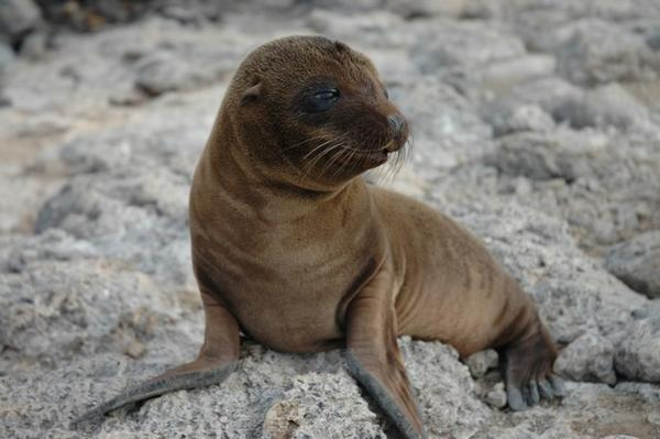 there will be more sea lions baby animal zoo