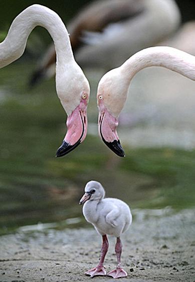 Flamingo Heart Baby Baby Animal Zoo