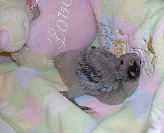 African Grey Parrot Crib Baby Animal Zoo