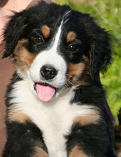 Dogs With Jobs: Border Collies - 255.9KB