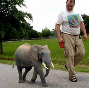 Can You Believe It? Adorable Pygmy Elephants! | Baby ...  Can You Believe...