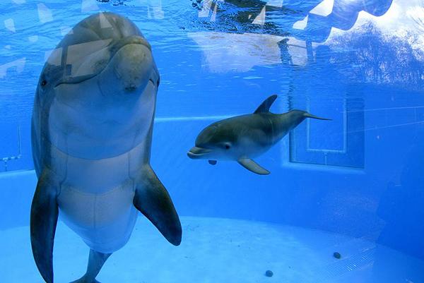 Baby Dolphin Tank Baby Animal Zoo