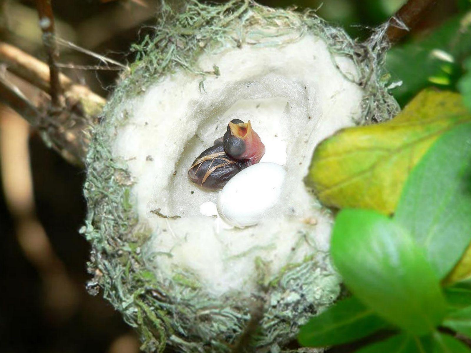Baby Hummingbirds: Tiny and Cute | Baby Animal Zoo