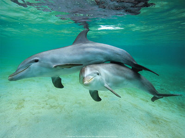 cute-baby-dolphin   Baby Animal Zoo