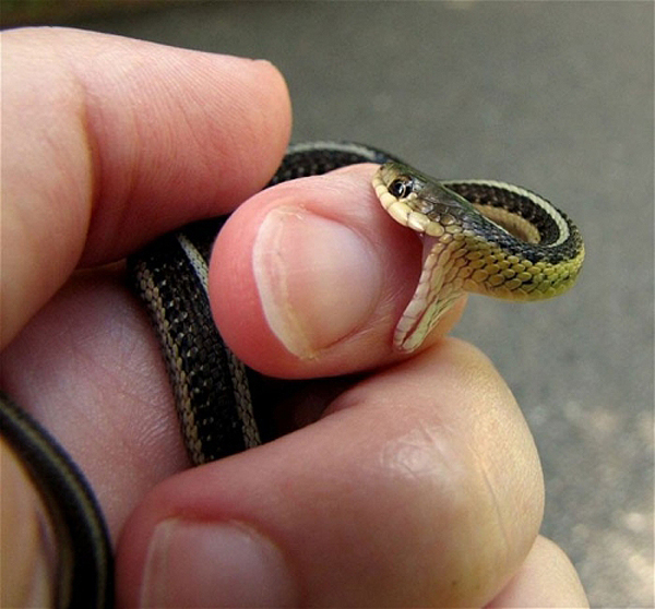 Sssssnakes! Cute Baby Snakes! | Baby Animal Zoo