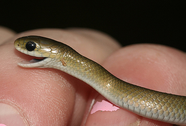 Sssssnakes Cute Baby Snakes