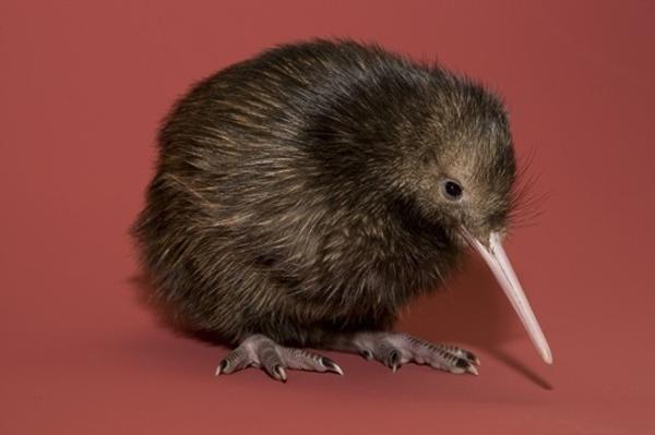 sad-baby-kiwi.jpg