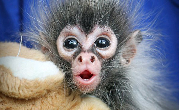 shocked-baby-monkey | baby animal zoo