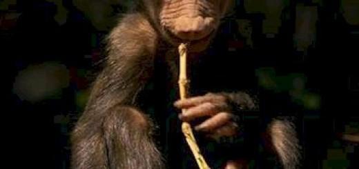 baboon-baby