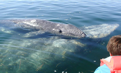 Cute Baby Whales