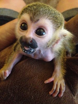 baby-squirell-monkey-pictures