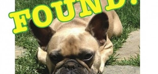 jeremy-renner-puppy