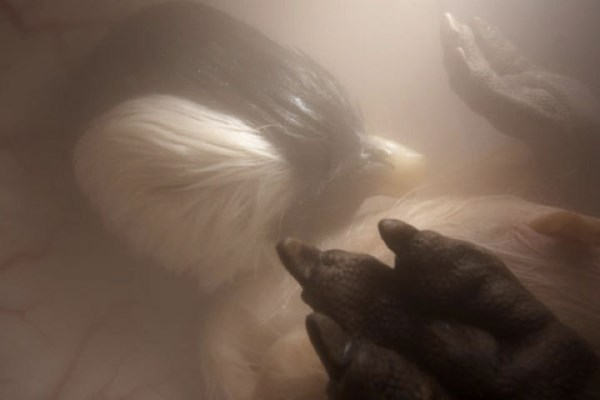 baby-penguin-womb