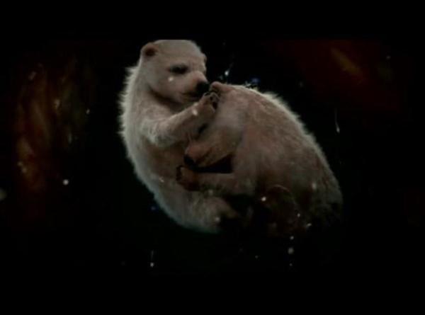 baby-polar-bear-womb