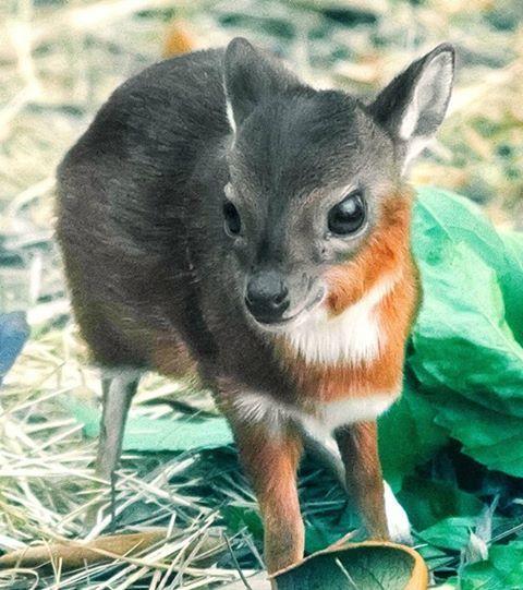 baby-water-deer-pics
