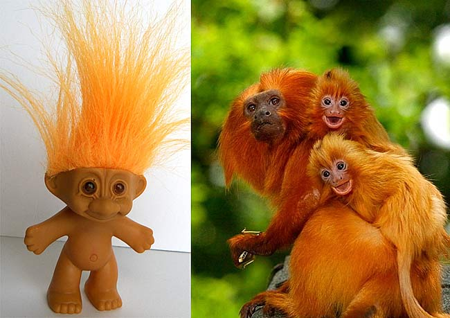 Golden Lion Tamarin Real Baby Troll Dolls Baby Animal Zoo