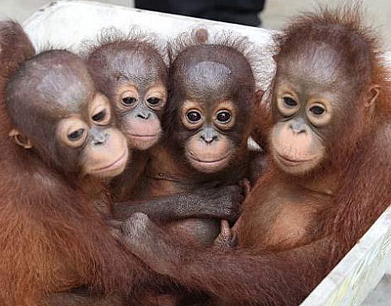 4-orang-babies